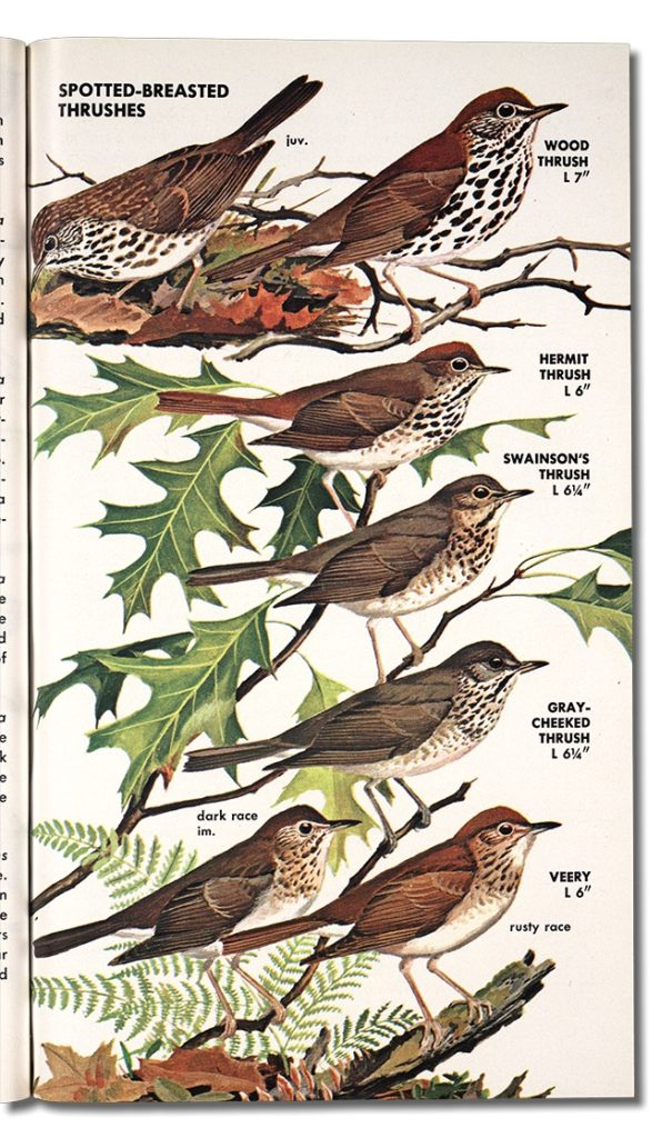 the Spotted-Breasted Thrushes page from Birds of North America featuring a variety of Spotted-Breasted Thrushes