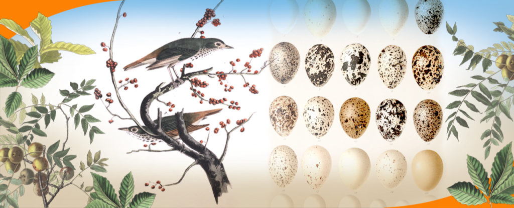 Drawn from Nature: Art, Science, and the Study of Birds cover photo