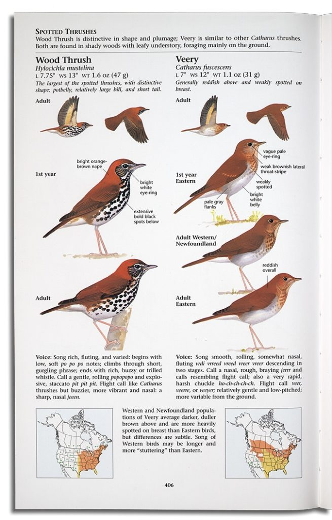 David Sibley's first edition field guide included two birds per page, shown