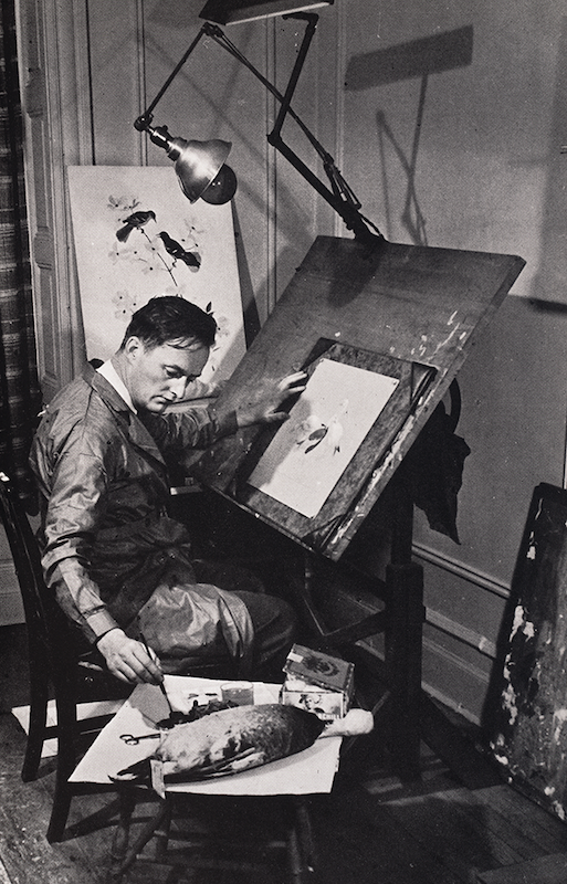 Roger Tory Peterson at work in his studio