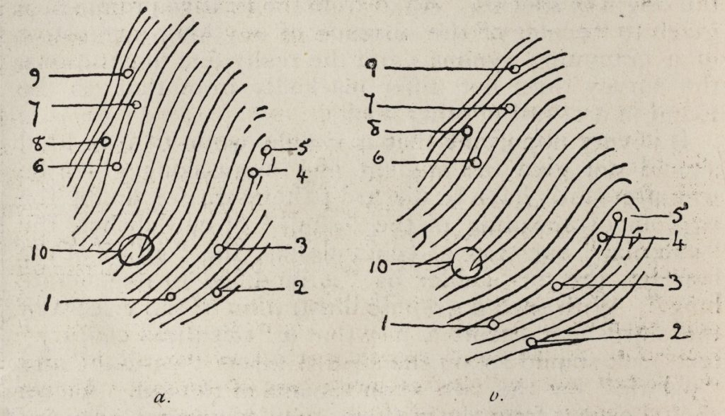 Illustration of friction ridges from a finger print